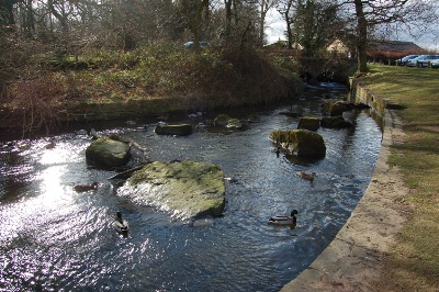 River and ducks at Cannon Hall Country Park