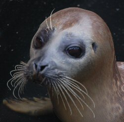 Mablethorpe Seal Sanctuary - Baby Seal