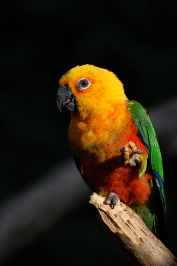 Parrot at Tropical Birdland Dresford Leicestershire