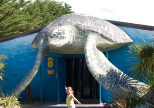 Weymouth Sea Life Centre, Turtles